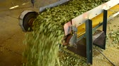 agronomists : Conveyor belt with dry hops in the drying room, Mradice Village near Town of atec