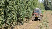 agronomists : Hop harvest in Mradice Village near Town of Zatec in Czech Republic