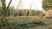 agronomists : Hop harvest, tractor carrying it hops harvester Stock Footage
