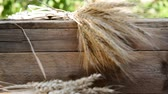 sheaf of barley : Still Life with wheat and barley, rack focus