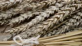 sheaf of barley : still life with wheat and barley, shot with slider, color shade Stock Footage