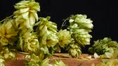 bitterness : Detail of Dry Hop Cones. Zoom in.
