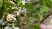 eggshells : Easter egg hanging on the apple tree in the garden. Rack focus. Stock Footage