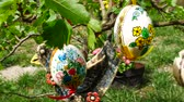 eggshells : Easter eggs hanging on the twig in the garden. Panning.