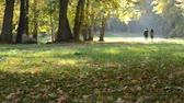 shallow depth field : Pair of young people walking in the autumn park