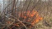 wood : Fire rages in long grass foreground