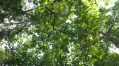 Camera rotating under tree tops covered with lush green leaves, sun shining through branches on bright summer day.