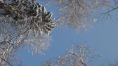 Camera rotating under tree tops covered with snow in winter forest. Low angle view. Vídeos