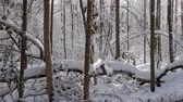 декабрь : Beautiful winter forest with trees covered with a thick layer of fresh snow on a sunny winter day. Panning shot
