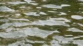 Green water rippling on surface of pond background Filmati Stock