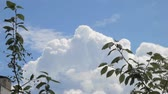 葉 : Green leaves on tree branches against white fluffy cumulus clouds in bright blue sky
