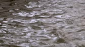 葉 : Brown water rippling on disturbed surface of river