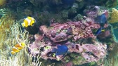 chvět se : Beautiful anemone and fish - clown on a coral reef.