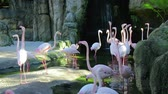 plumagem : A group of pink flamingos near a small waterfall
