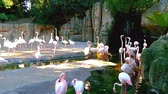 ringed : A group of pink flamingos near a small waterfall