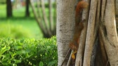 springtime : Squirrel on the tree Stock Footage