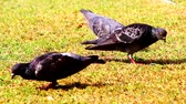 squali : Birds in the garden Filmati Stock