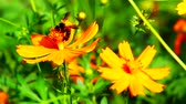 Bees with flowers in the garden Stock Footage