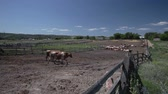 fornecer : Dairy cows in paddock at the farm