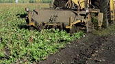 machinery : The harvest of sugar beet Stock Footage