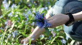kar taneciği : The young woman collecting the bouquet of the bluebells Stok Video