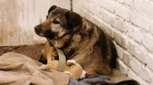 houseless : Homeless animals. A stray mongrel dog living in an enclosure of animal shelter. HD