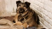 paw : Homeless animals. A stray mongrel dog living in an enclosure of animal shelter. HD