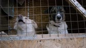 doghouse : Homeless animals. Close-up shot of muzzles of two mongrel dogs behind the bars of an animal shelter. HD
