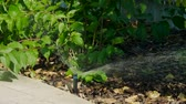 kuraklık : Automatic sprinkler watering system for plants and lawn. HD
