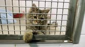 domestique : Pets. Close-up shot of cat playing in a cage of animal hospital. 4K