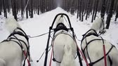 szánkó : Russian Troika of horses. Three white horses in harness pulling a sleigh in the winter forest. Slow motion. HD Stock mozgókép
