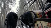 уздечка : Russian troika of three black horses pulling a sleigh in forest. Slow motion. HD Стоковые видеозаписи