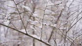 queda de neve : Winter landscape. Close-up shot of leafless tree branches against cloudy sky. Slow motion. HD Vídeos