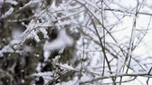 queda de neve : Winter landscape. Close-up shot of snow falling on leafless tree branches against cloudy sky. Slow motion. HD
