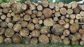 picada : Chopped and sawn trunks of trees is stacked in a large log woodpile in the yard. 4K