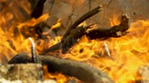 Campfire. Open fire with firewood made outdoors by people who are camping. Greece. Slow motion. HD Stok Video