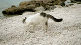 chat : Stray cat burying something in sand on beach of Greece. Slow motion. HD Vidéos Libres De Droits