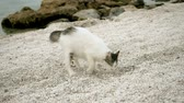 bitang : Stray cat burying something in sand on beach of Greece. Slow motion. HD Stock mozgókép