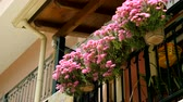 window gardening : Cityscape. Blossoming flowers on the streets of Benitses in Greece. 4K
