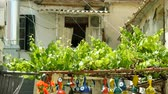 window gardening : Young grapes and an amulet from the evil eye in courtyard of greek house. Greece. 4K Stock Footage