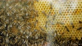 пчела : Beehive, swarm of bees and honey. Bee producing wax and building honeycombs from it. 4K