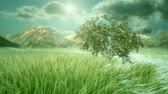 wind : Heavenly and Cinematic Nature Scene Stock Footage