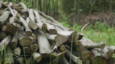 chop sticks : Stack of logs chopped trees. close up