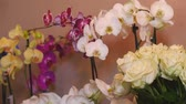 bloom : Fresh Cut Flowers And Arrangements In Florist Shop, Tracking Shot Stock Footage