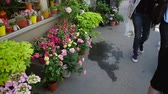 fragility : Panning from flowers market boutique to shoppers in street, Paris, France Stock Footage
