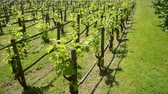 marlborough : Vineyard in Versailles, in the Hameau de la Reine - the rustic retreat in the park of Chateau de Versailles, built for Marie Antoinette in 1783 near the Petit Trianon in the Yvelines, France. Stock Footage