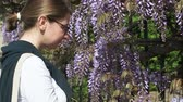 wisteria : Majestic wisteria plant in urban environment - woman smelling the plant enjoying the spring presence - Wisteria is a genus of flowering plants in the legume family, Fabaceae, that includes ten species of woody climbing bines native to the Eastern United S Stock Footage