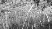 баварский : Closeup of calm fields with grass in German mountains black and white cinematic