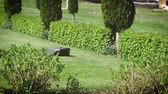 recarga : Vintage and modern luxury green garden with working in silence auto mower an mobile smart home controlled autonomous mower