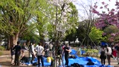 unutulmayan : Crowded Ueno park, Japanese people at hanami cherry blossom festival